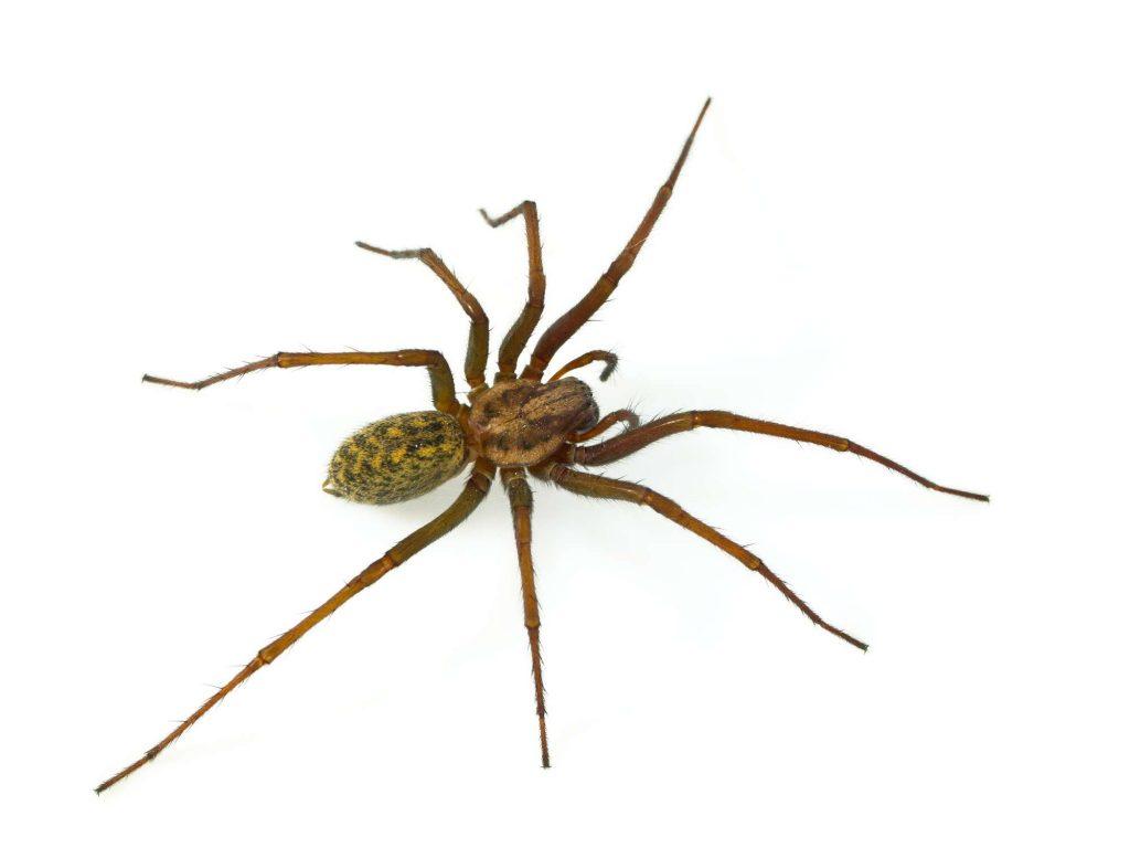 Spider Control Boise