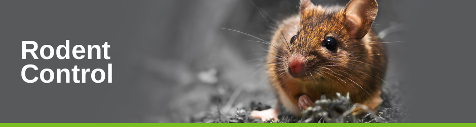 Rodent-Control_HeaderImage_1