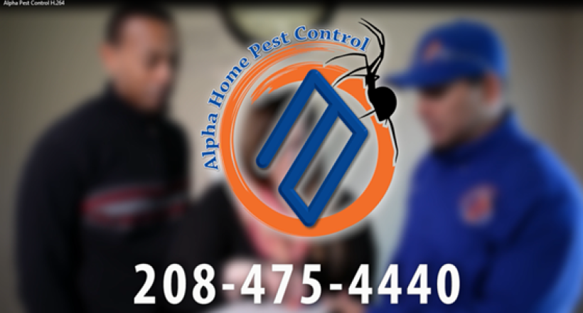 Alpha Home Pest Control In Boise, Meridian, Eagle, Nampa, Caldwell, Star, Melba